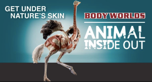Who doesn't want to see animal insides?